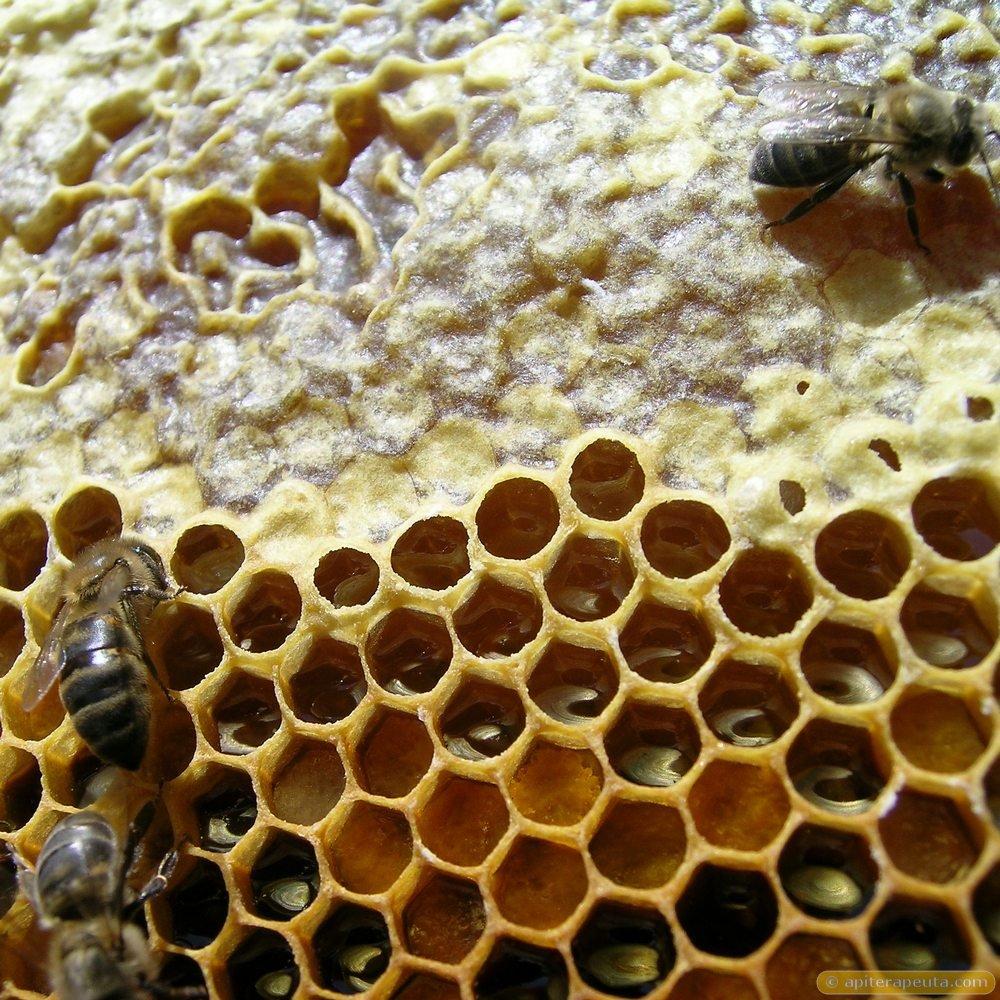 Miel de abeja - Origen
